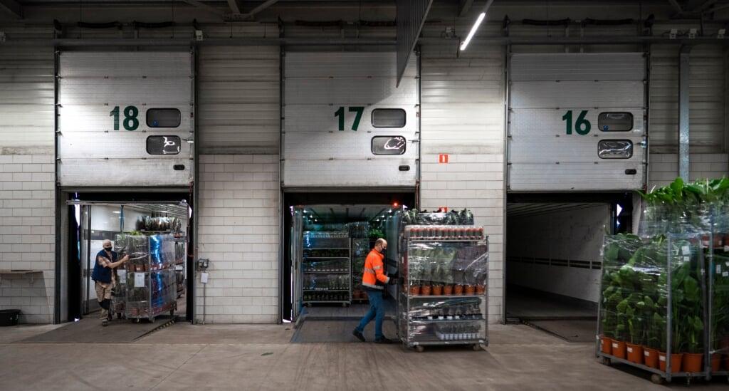 BLEISWIJK - Laden en lossen van planten bij Royal Lemkes in Bleiswijk. FREEK VAN DEN BERGH  (beeld Freek van den Bergh)