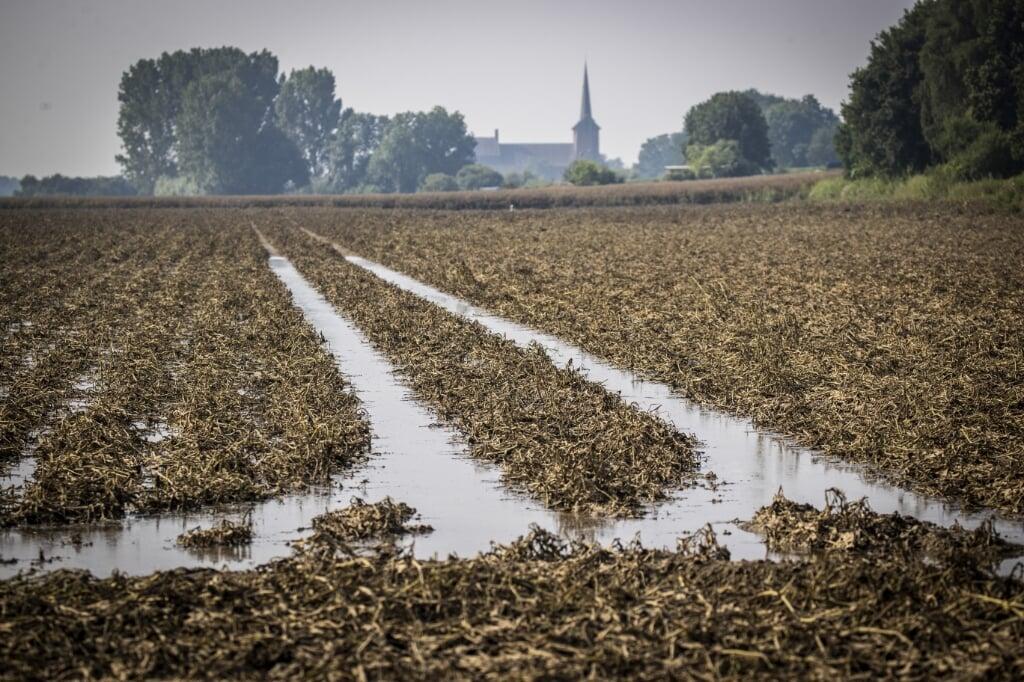 Door de waterramp in Limburg zijn veel oogsten hier mislukt. Zeeuwse boeren besloten hun Limburgse medeboeren hooi te leveren.  (beeld anp / Vincent Jannink)