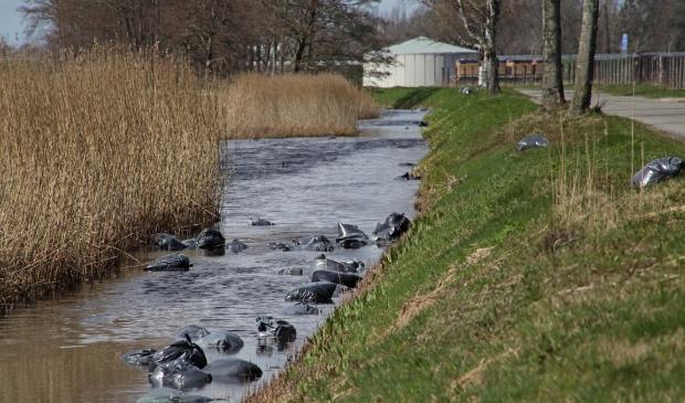 Hennepafval in een sloot in Wildervanksterdallen. Foto: Bert Woltjes.