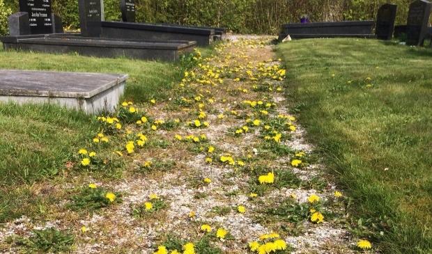 <p>De begraafplaats in Zandeweer lag er de afgelopen tijd niet bepaald fraai bij...</p>