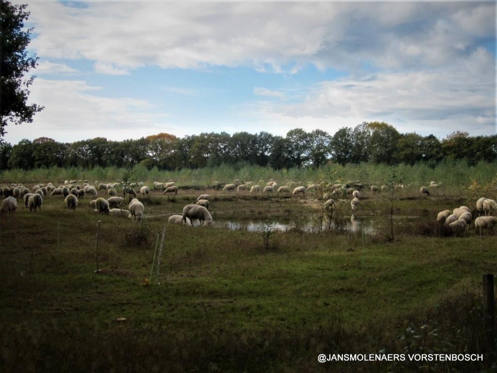 Bernheze - Herfst Foto: © aangeleverd door onze lezers © mooibernheze