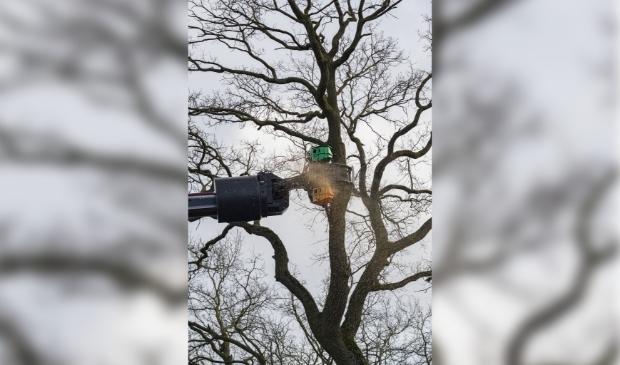 Heesch - Twee bomen gekapt aan de Graafsebaan Heesch