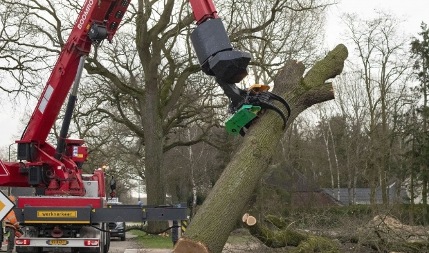 Heesch - Twee bomen gekapt aan de Graafsebaan Heesch  Foto: Marcel van der Steen  © mooibernheze