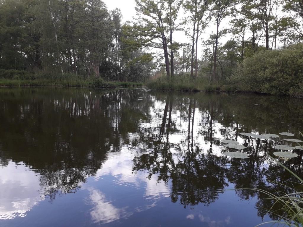 Vorstenbosch - © Wim Rijkers Foto:  © mooibernheze