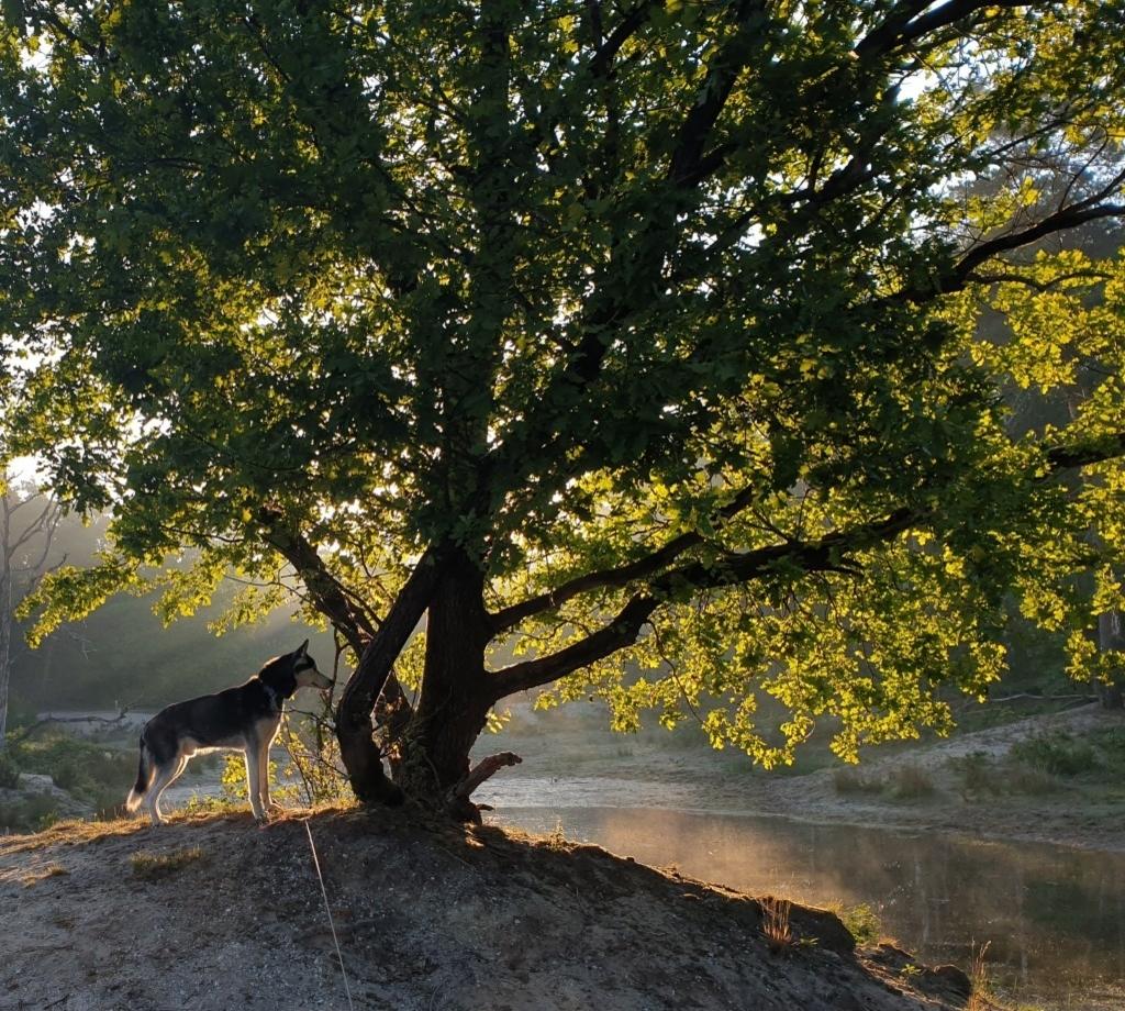 Bernheze - Foto's fotowedstrijd 'Bernheze' Foto: © lezers © mooibernheze