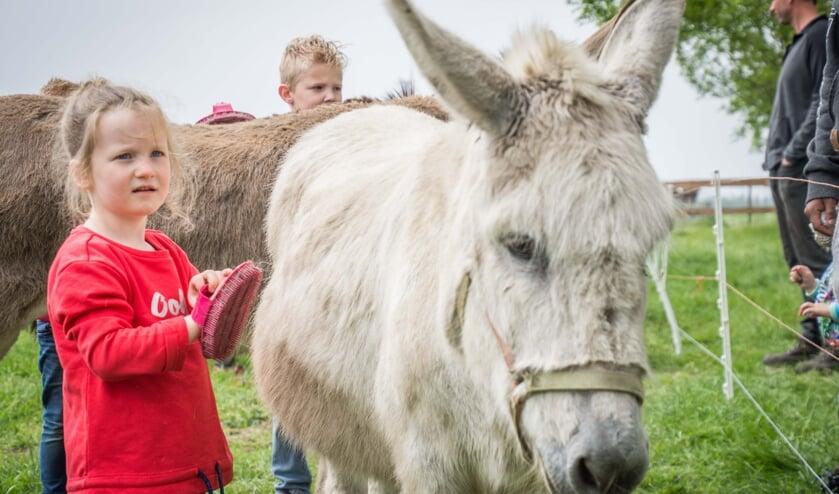 Florine aait ezeltje Fee met haar borstel en wil nog vaak naar de kinderboerderij van De Leemberg.