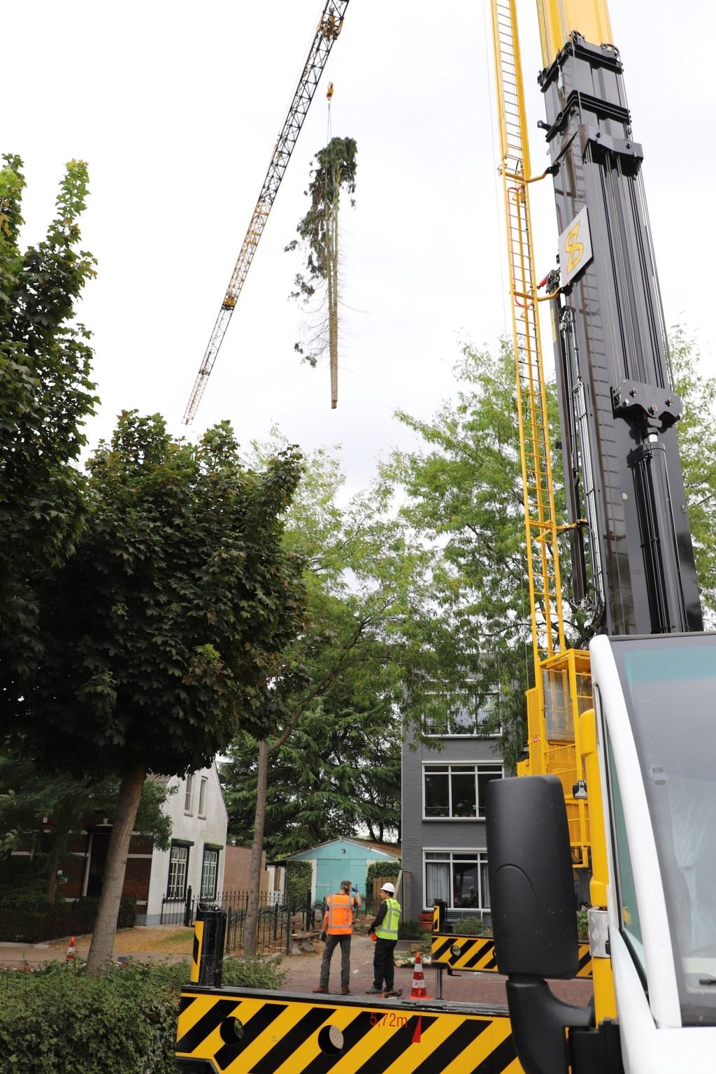 Met een immense kraan werden de coniferen in korte tijd verwijderd.   © Minerve Pers
