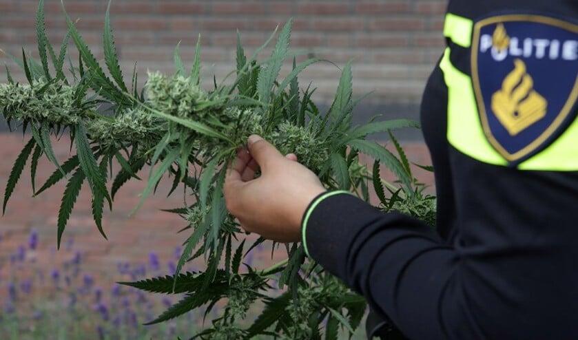 De politie heeft in de woning een hennepkwekerij aangetroffen in woning aan de Grootveldstraat