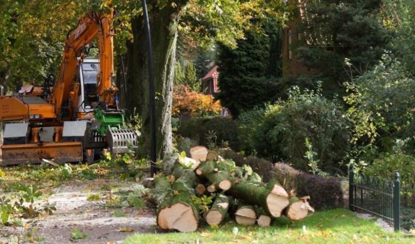 Bewoners Sleedoorn en Bereklauw vrezen kaalslag door bomenkap in beide straten.