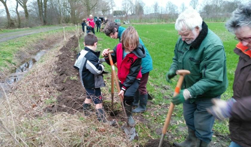 Kinderen hebben maasheggen geplant in Boxmeer