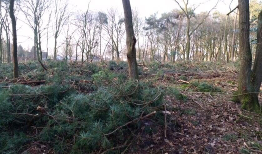 De Peelse bossen worden flink uitgedund