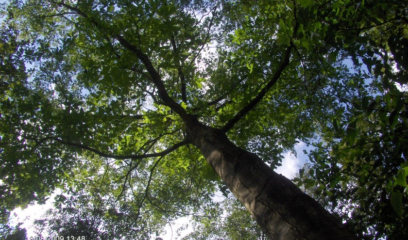 D66 wil meer bomen in de gemeente Gennep.