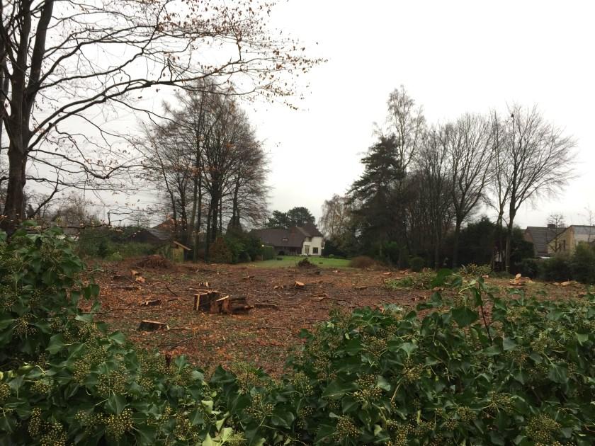 Nabij de Vlaamse Gaai in Boxmeer is onlangs een volledig bosje gekapt. Tot groot ongenoegen van aanwonenden.