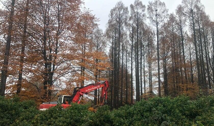 Burgemeester Karel van Soest heeft de kap van een bosje in het Luneven in Boxmeer stilgelegd.