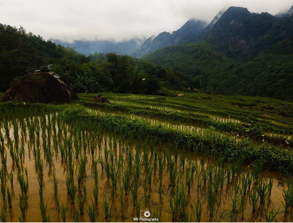 Wendy Hogervorst bracht een bezoek aan het mooie en groene Vietnam. © Kliknieuws Uden