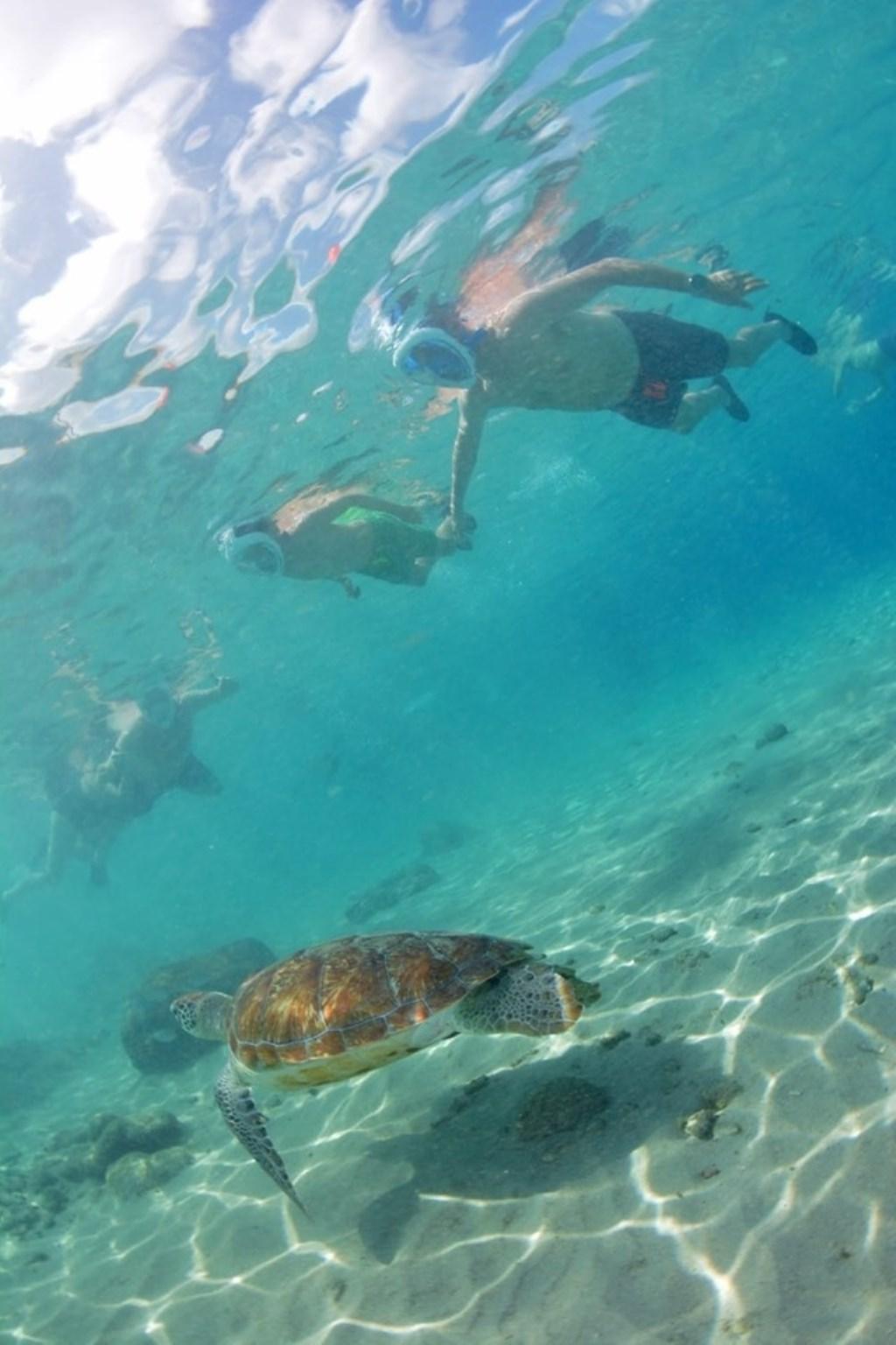 Onder water! Vader Eric en zoon Tommy samen aan het snorkelen op Curaçao. Ingestuurd door Jessica Heiming. © Kliknieuws Uden