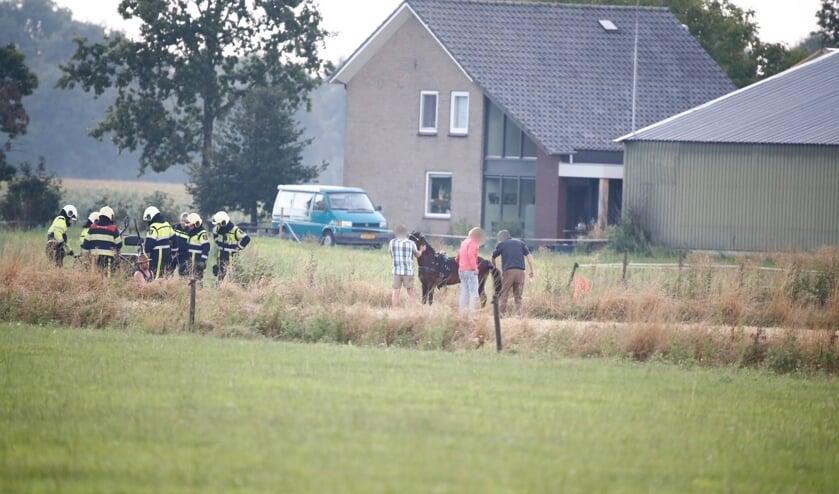 Brandweer bevrijdt paard uit sloot in Langenboom.