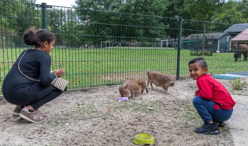 Met de opbrengst wil de kinderboerderij het voerhok voor dieren moderniseren (foto: Peter Noy)