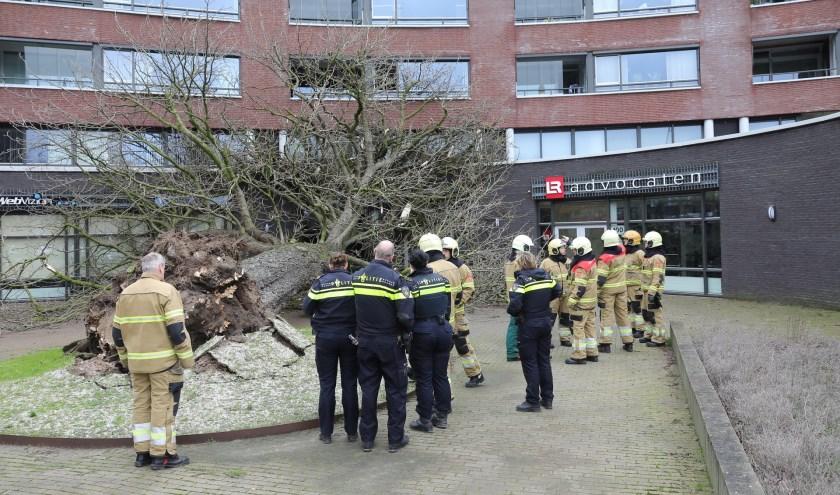 Omgewaaide boom zorgt voor schade aan gebouw Ridderhof. (Charles Mallo/Foto Mallo)