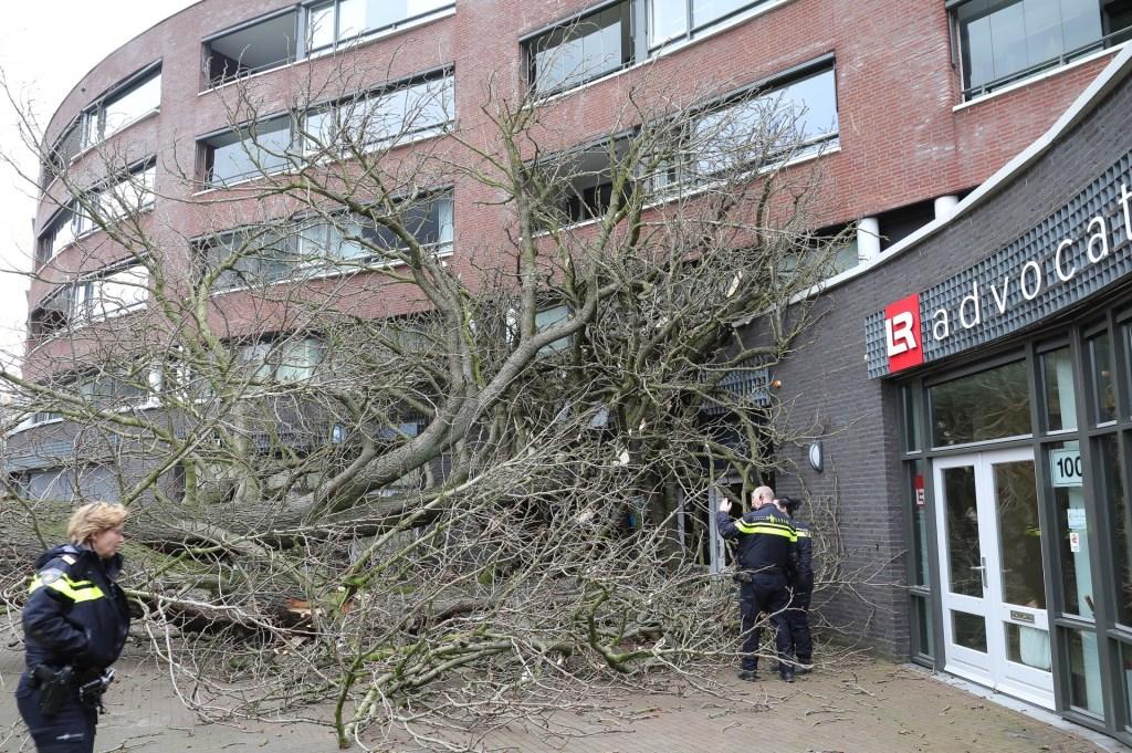 Omgewaaide boom zorgt voor schade aan gebouw Ridderhof. (Charles Mallo/Foto Mallo)  © Kliknieuws Oss