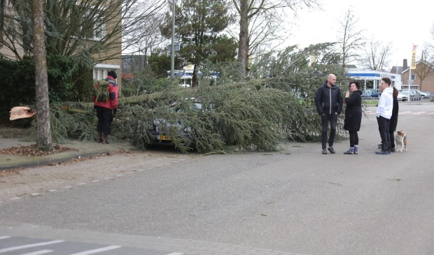 Boom waait op auto in Beethovengaarde. (Foto: Charles Mallo / Foto Mallo)  © 112 Brabantnieuws