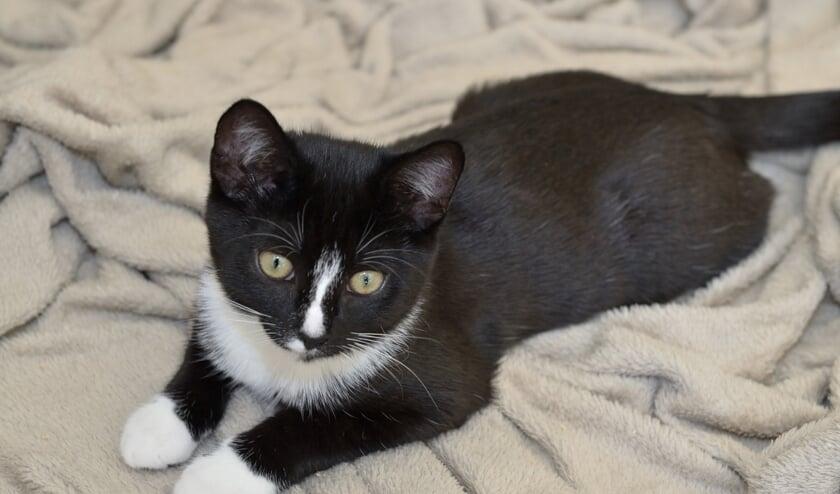 <p>De eigenwijze vier maanden oude kitten Betsy houdt ervan om geaaid en geknuffeld te worden.</p>