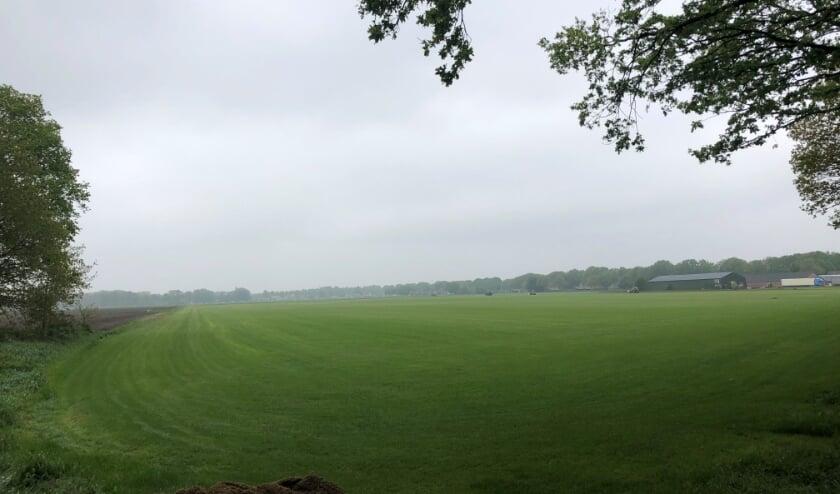 <p>Op dit gigantische grasveld aan de rand van Stevensbeek komt mogelijk een enorm park vol zonnepanelen.</p>