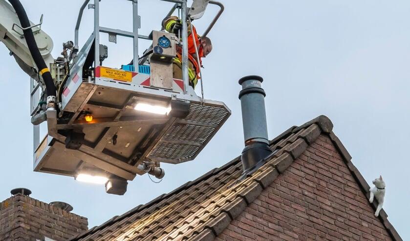 Brandweerlieden halen kat van dak van appartementengebouw. (Foto: Charles Mallo, Foto Mallo)