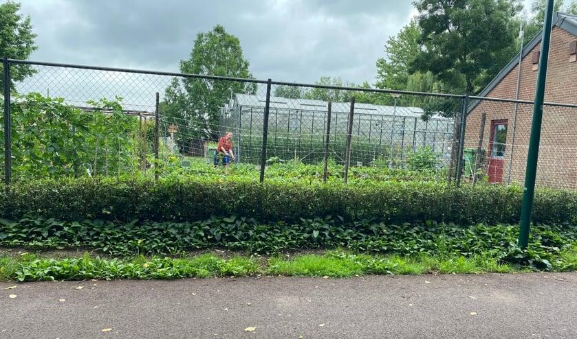 <p>De hele ecologische tuin draait op vrijwilligers. Mensen die graag in de tuin bezig zijn en genieten van het contact met elkaar en de natuur. </p>
