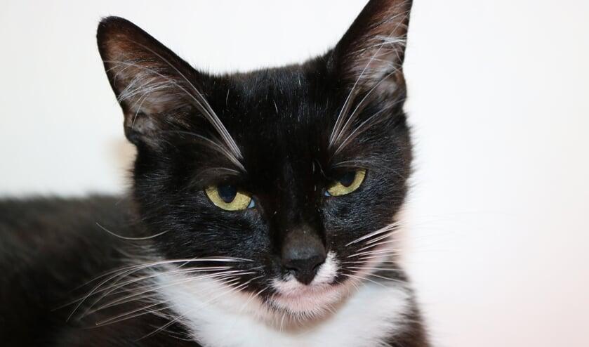 <p>April is een ongeveer anderhalf jaar oude kat die in het dierentehuis is bevallen van vier kittens.&nbsp;</p>