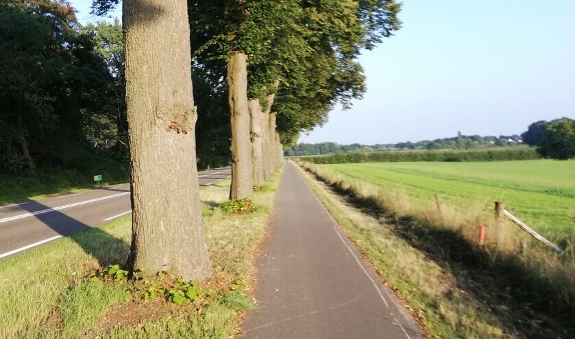 <p>De veelbesproken bomen langs de Rijksweg N271 tussen Mook en Plasmolen.</p>