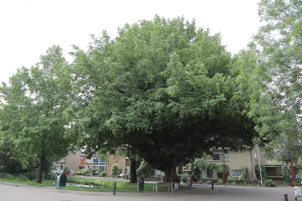 Deze boom aan de Vijverlaan in Bodegraven heeft ook een TreeTag. Foto:  © Graficelly B.V.