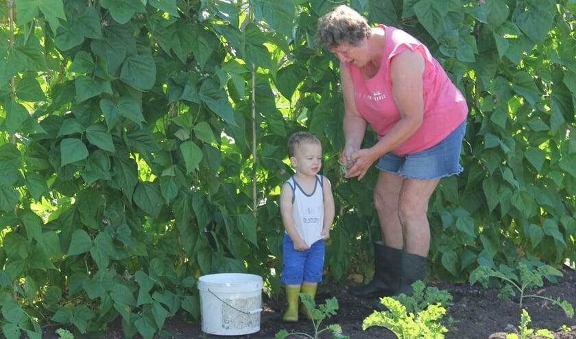 Tim en oma Truus plukken boontjes uit eigen tuin.
