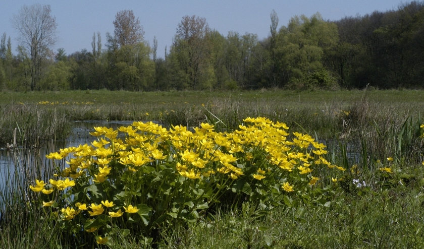 De natuur in? Vermijd dan drukke plekken en houd minimaal 1,5 meter afstand! (Foto: PR/Ferry Siemensma)