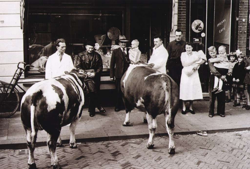 De koeien trokken vroeger veel bekijks in de Dorpsstraat voordat zij geslacht werden.  © hartvanlansingerland