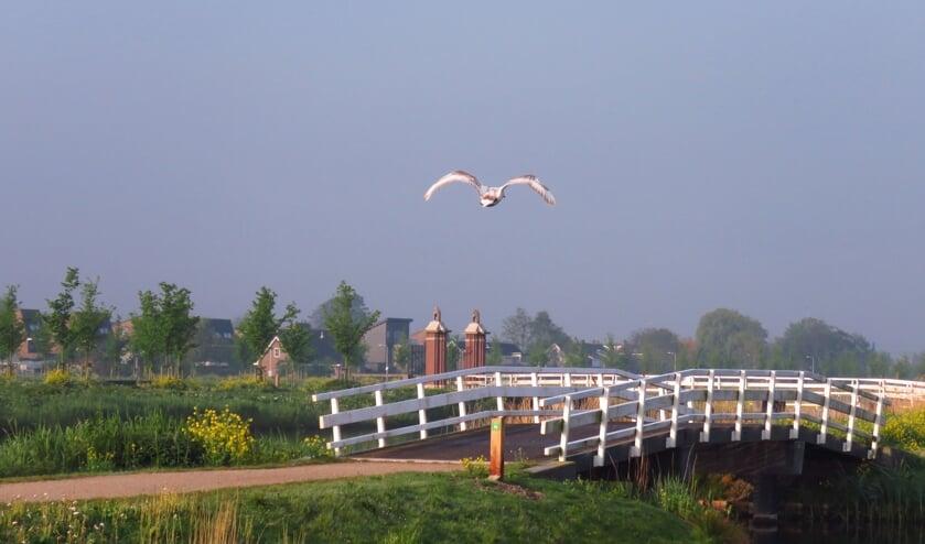 De Groenzoom blijft wat de Lansingerlanders betreft de grens met Pijnacker-Nootdorp. (foto: Nel Giorgi)