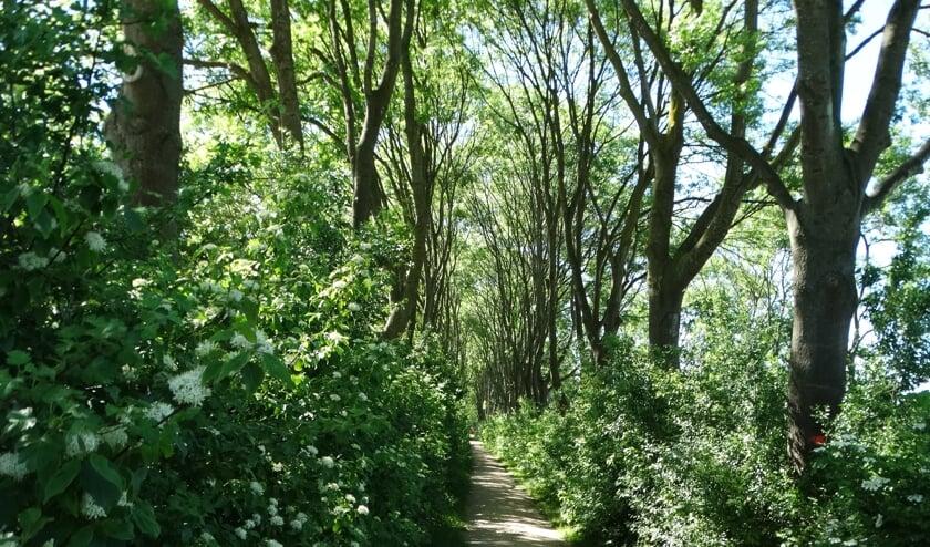 Bomenkap in de Rottemeren is een heikel punt. (Foto: archief/Andrea van der Houwen)