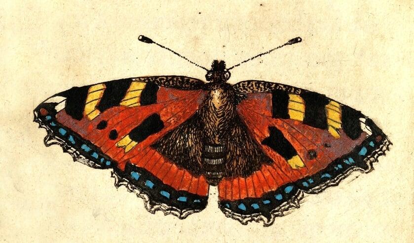 <p>Kleine vos, prent uit: &lsquo;Metamorphosis Naturalis&rsquo; deel I van Johannes Goedaert (1660).</p>