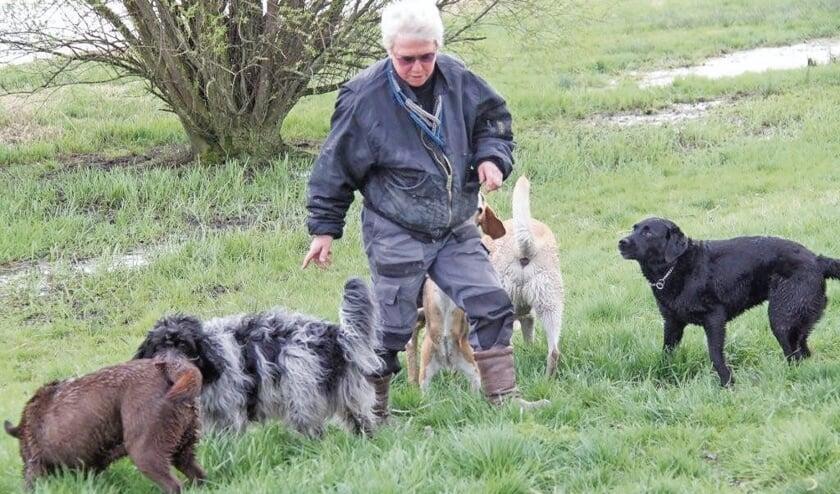 """<p pstyle=""""BODY"""">Dagelijks gaat Jos wandelen met vijf tot acht honden.</p>"""