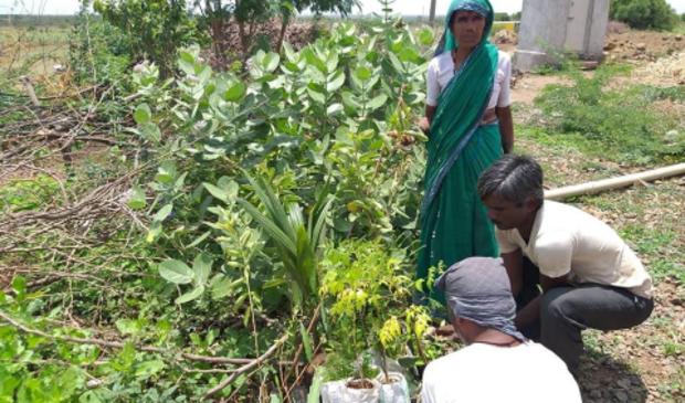 Een gesteund doel: Stichting Jalihal is bezig een miljoen bomen te planten voor verbetering van de leef- en werkomstandigheden op het Indiase platteland.