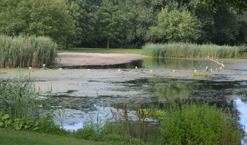 De zwemplas van Wevershoek wordt weer geplaagd door blauwalg