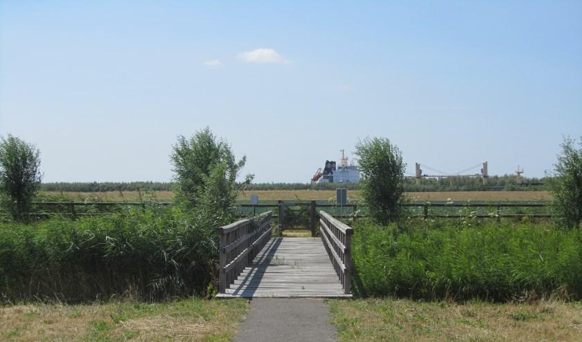 Riet, graslanden en water vormen het landschap van Het Buitenland. Foto: Bergarde Galleries.