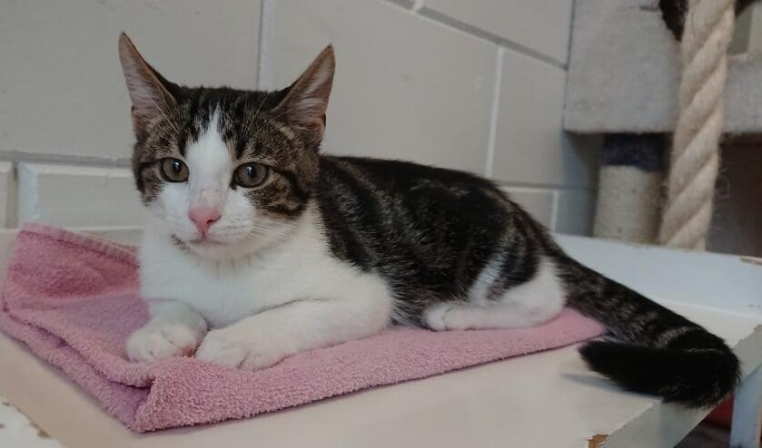 Yani is een van de kittens in het asiel.