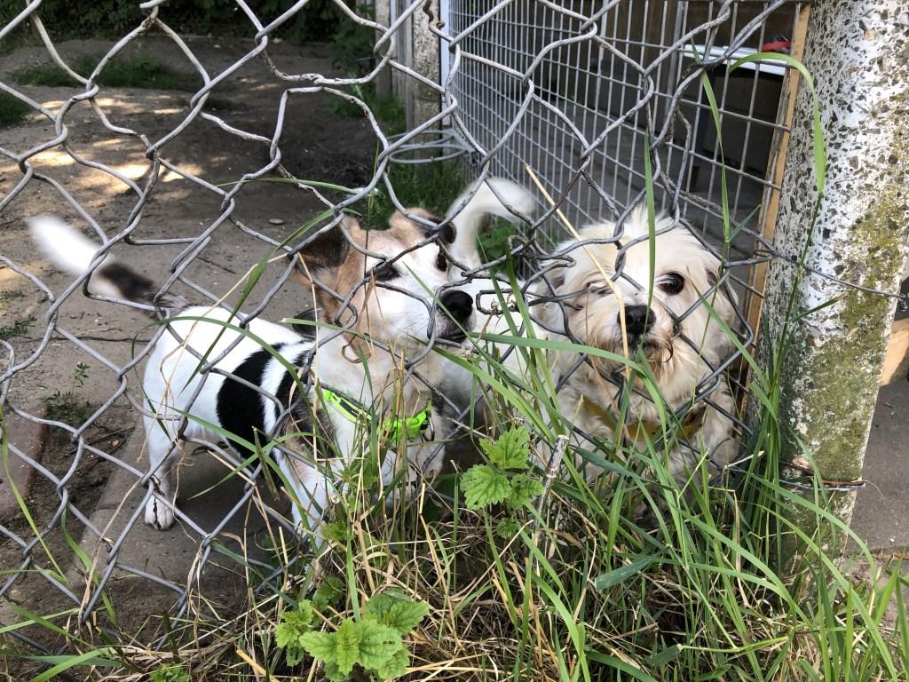 De hondjes hebben het prima naar hun zin bij de dierenopvang.   © Baruitgeverij