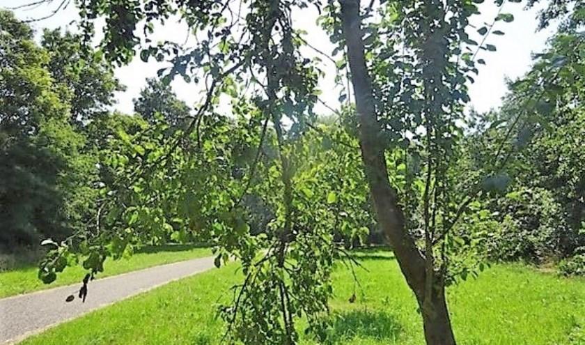 Pruimenboom met pluk schade