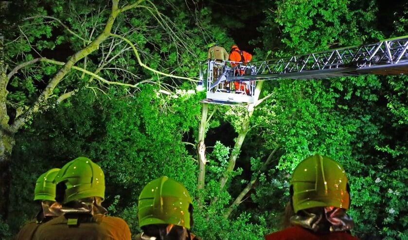 Hoog in de boom om verdere schade te voorkomen