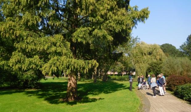 <p>Watercipres of Chinese mammoetboom in park Buitenoord. </p>