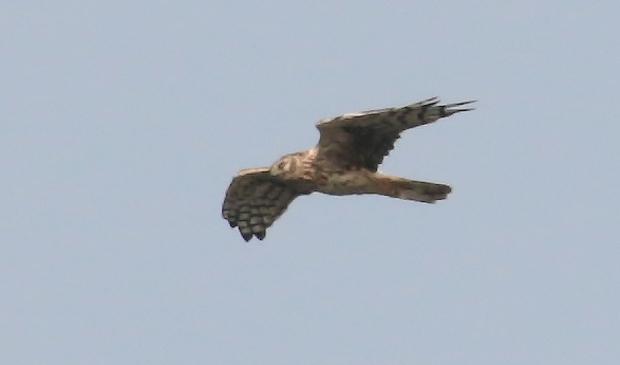 <p>Trekvogels tellen tijdens Euro Birdwatch</p>