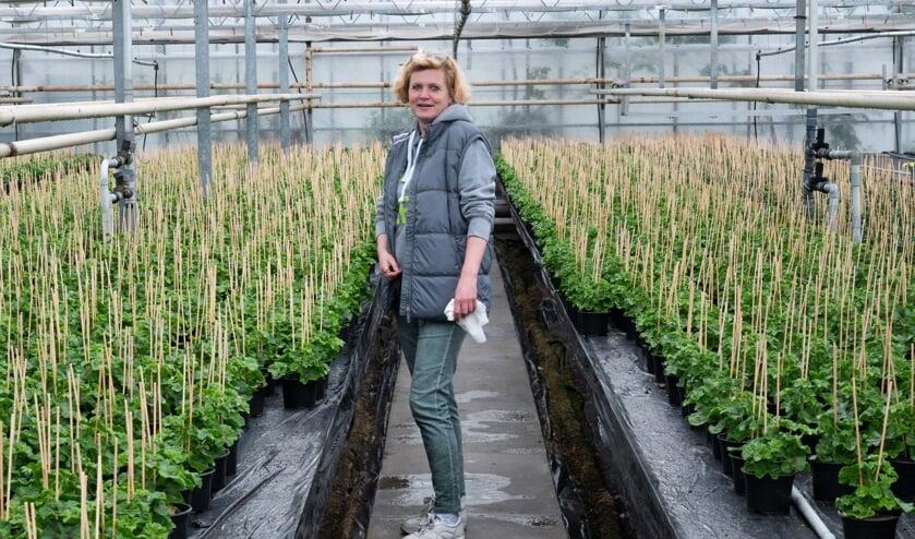 <p>Saskia Bakker tussen de ontelbare geraniums die de klanten zelf uit mogen zoeken.</p>