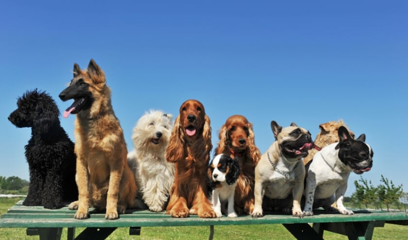 <p>Dankzij de nette begroting kan ook de hondenbelasting afgeschaft worden. Dit ongetwijfeld tot groot genoegen van menig hondenbezitter.</p>